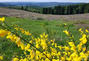 csm Wandern mit genuss 450016e517 Zauberpflanzen, Wälder und wundersame Bäume