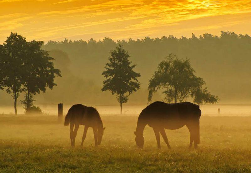 Morgenstimmung im Naturpark Niederlausitzer Landrücken