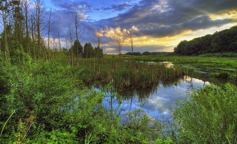 Wildnisgebiet im Naturpark Lauenburgische Seen, ein See
