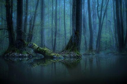 Augen im Wald