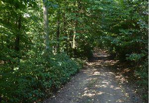 csm Waldweg 27e87bd649 Hütten Tour   Gehen Sie Ruhig mit