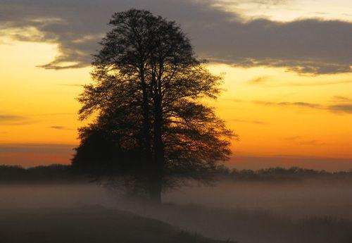 Nebel über der Wiese