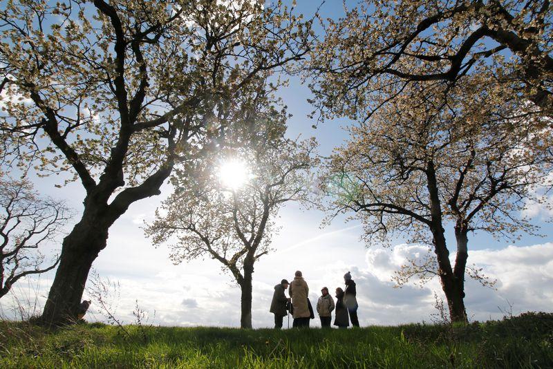 Eine Gruppe von Wanderern steht unter Kirschbäumen im Kreis. Das Foto wurde aus einer Distanz im Gegenlicht aufgenommen und die Personen sind im Vergleich zu den Bäumen sehr klein.