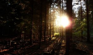 csm Sonnenstrahl Wald 62766903c0 Adventsmeditation
