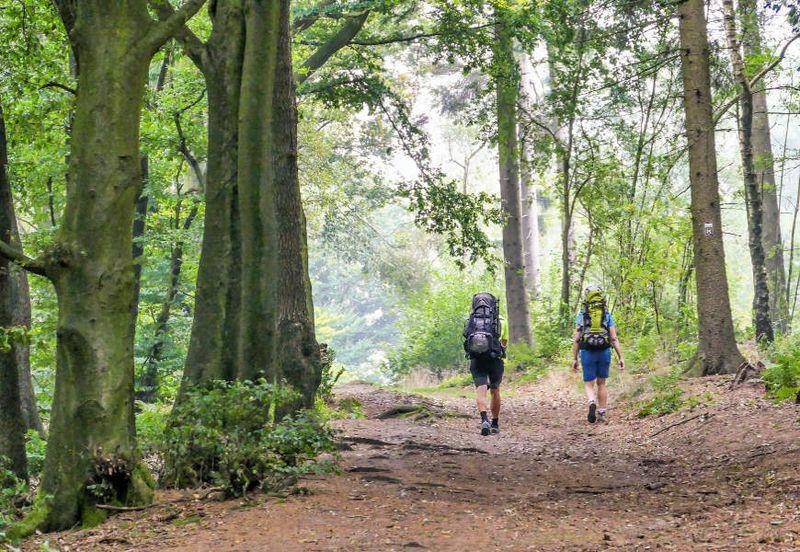 Zwei Wanderer laufen einen Wanderweg entlang durch den Wald. Sie sind von hinten fotografiert