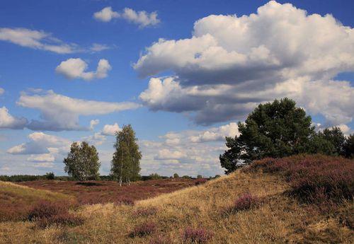 Heideblick im Naturpark Elbhöhen-Wendland