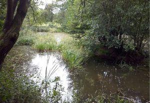 csm Leben im Wasser 49ba4a3513 Leben im Wasser   ein Forschercamp an Teich und Bach
