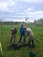Obstbaumpflanzung im Naturpark Dahme-Heideseen - Pressefoto 2