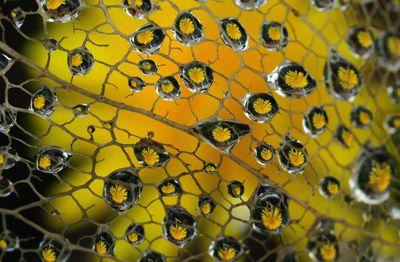Die kleinen Tröpfchen des Morgentaus sind herangezoomt, in ihnen spiegelt sich eine gelbe Blume.