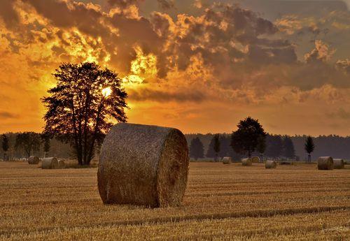 Sonnenuntergang hinter einem Feld